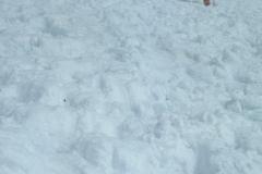 079 gran zebru 06 87